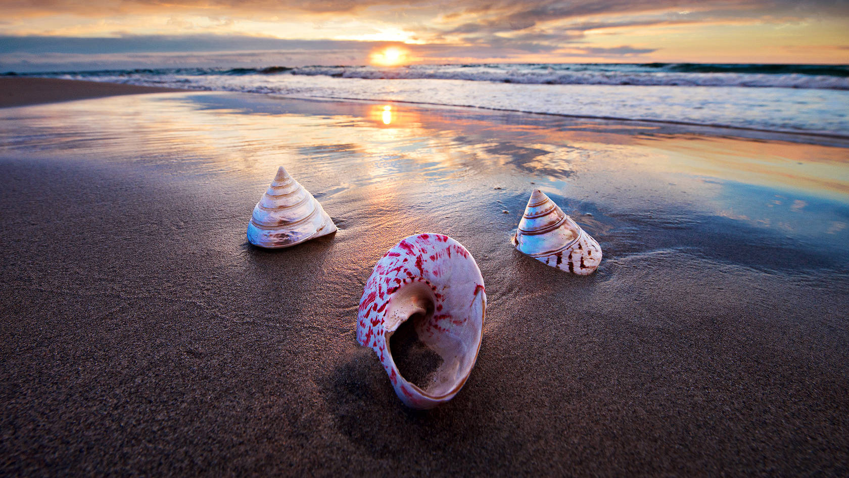 Julie Fletcher Photography Sea Shells